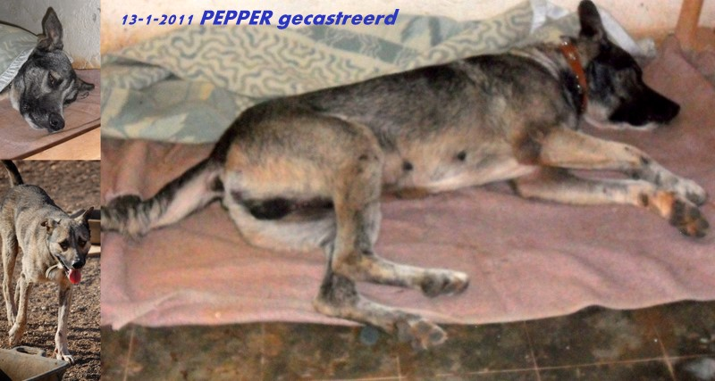 pepper-castratie